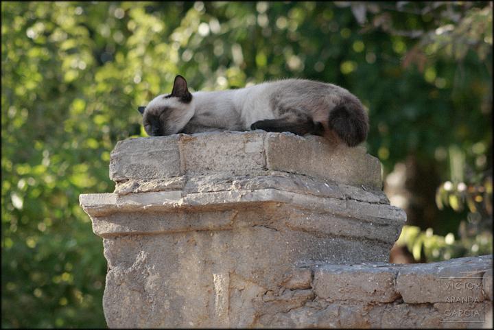 fotografia,gato,cordoba,dormido