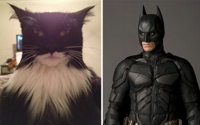 This Cat Looks Like Batman