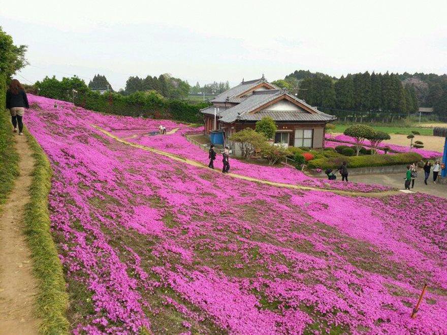 omorfos-kosmos.gr - Αξίζει να το δείς! Καταπληκτικός σύζυγος φύτεψε χιλιάδες λουλούδια για να μπορεί να τα μυρίζει η τυφλή του γυναίκα!