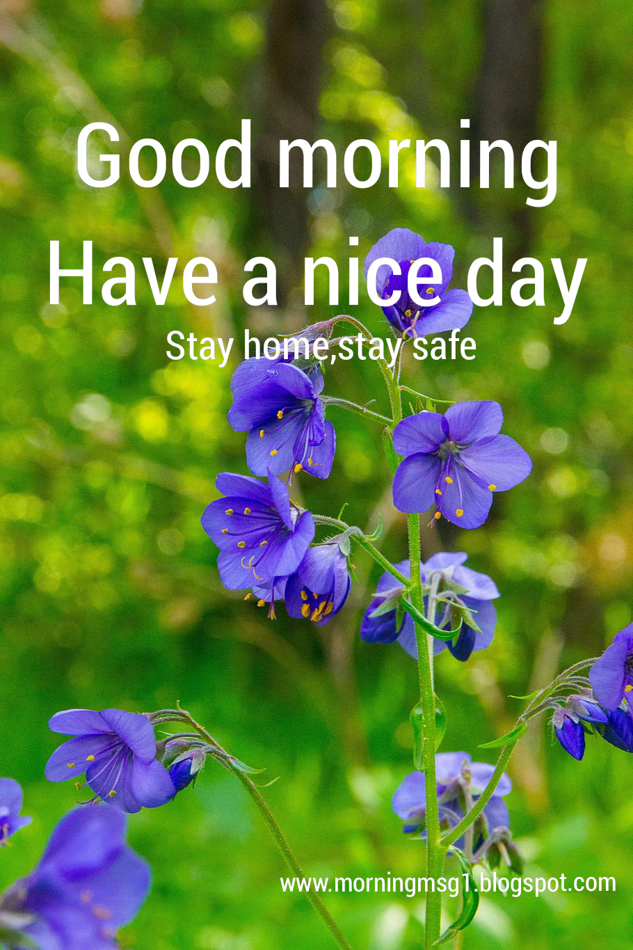 Good Morning Message Good Morning Messages Shayri And Jokes