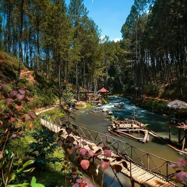 16 hutan pinus rahong wisata pangalengan ig @wisataalambandung