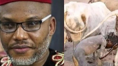 See The Future Leader Of Nigeria, Taking His Shower – Nnamdi Kanu