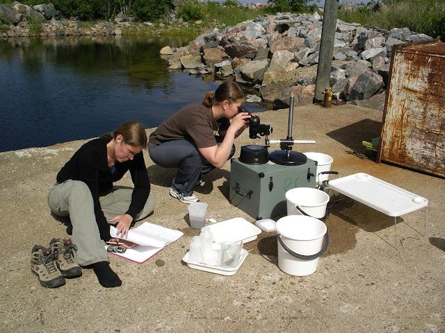 Kaksi henkeä istuu betonilaiturilla ja katsoo mikroskooppiin ja katsoo näytteitä ulkona