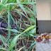 Após 10 horas de cerco policial, agressor é preso em Bossoroca