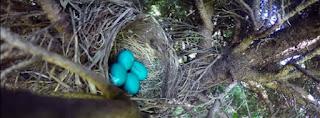 Video viral de un nido de un pájaro