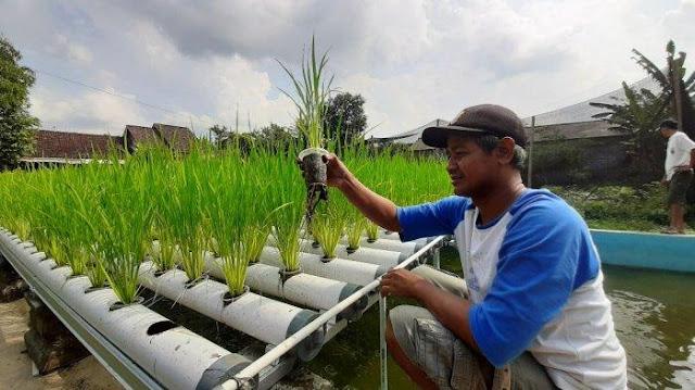 Budidaya Pertanian Perkotaan Ini Bisa Menjadi Sumber Pangan Keluarga