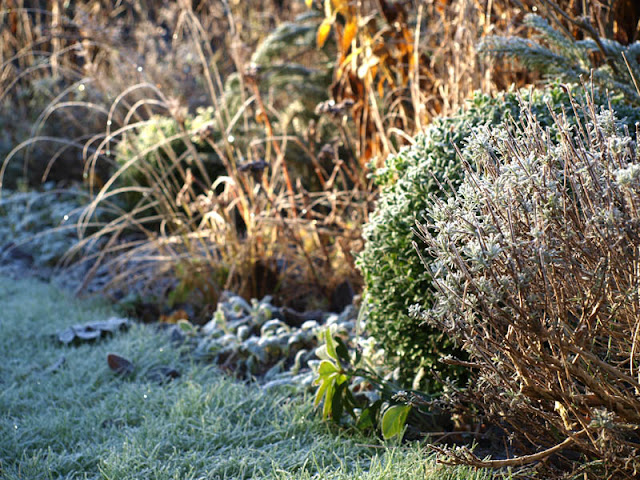 Græsser, lavendler, roser og stauder - alle får lov at være med til at gøre oplevelsen af haven om vinteren mere spændende.