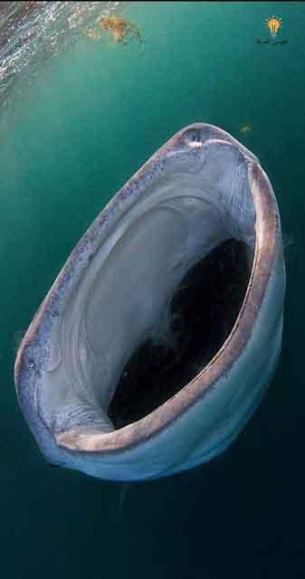 معجزة الحوت