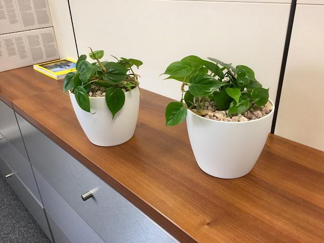 planten huren voor kantoorruimte Antwerpen Brussel gent Limburg Vlaams Brabant