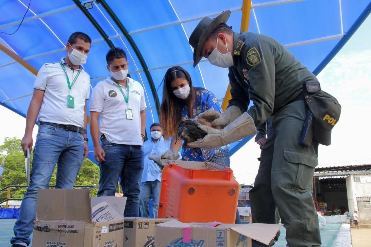 Las actividades sirvieron además para sensibilizar a la comunidad del Meta de evitar la tenencia de animales silvestre como mascotas