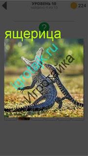 ящерица нападает на крокодила со спины 10 уровень 400 плюс слов 2