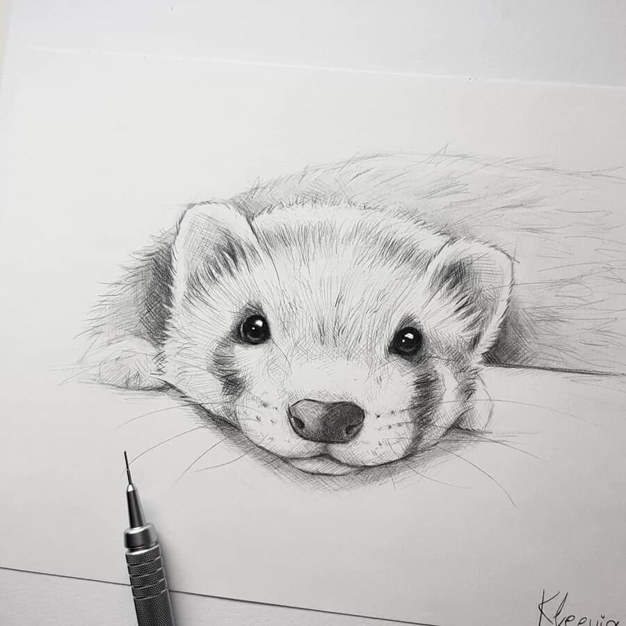 03-Ferret-portrait-Kleevia-www-designstack-co