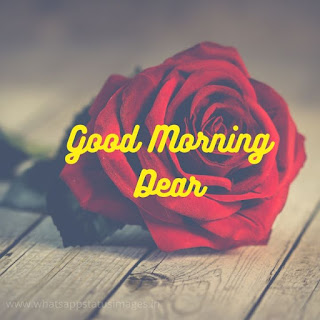 Romantic Good Morning Image With Rose