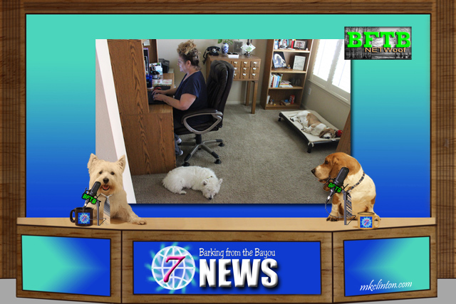 BFTB NETWoof News on dog-friendly work places
