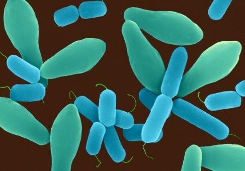 Crean primera base mundial de datos para microbios