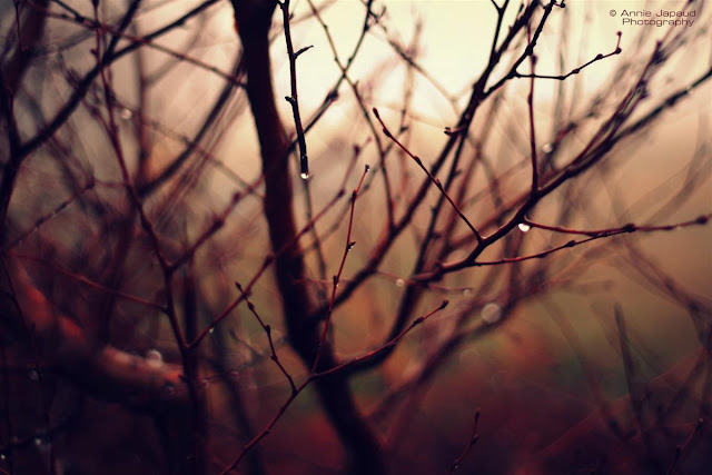 dreamy forest image, naked branches and twigs