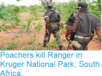 https://sciencythoughts.blogspot.com/2018/07/poachers-kill-ranger-in-kruger-national.html