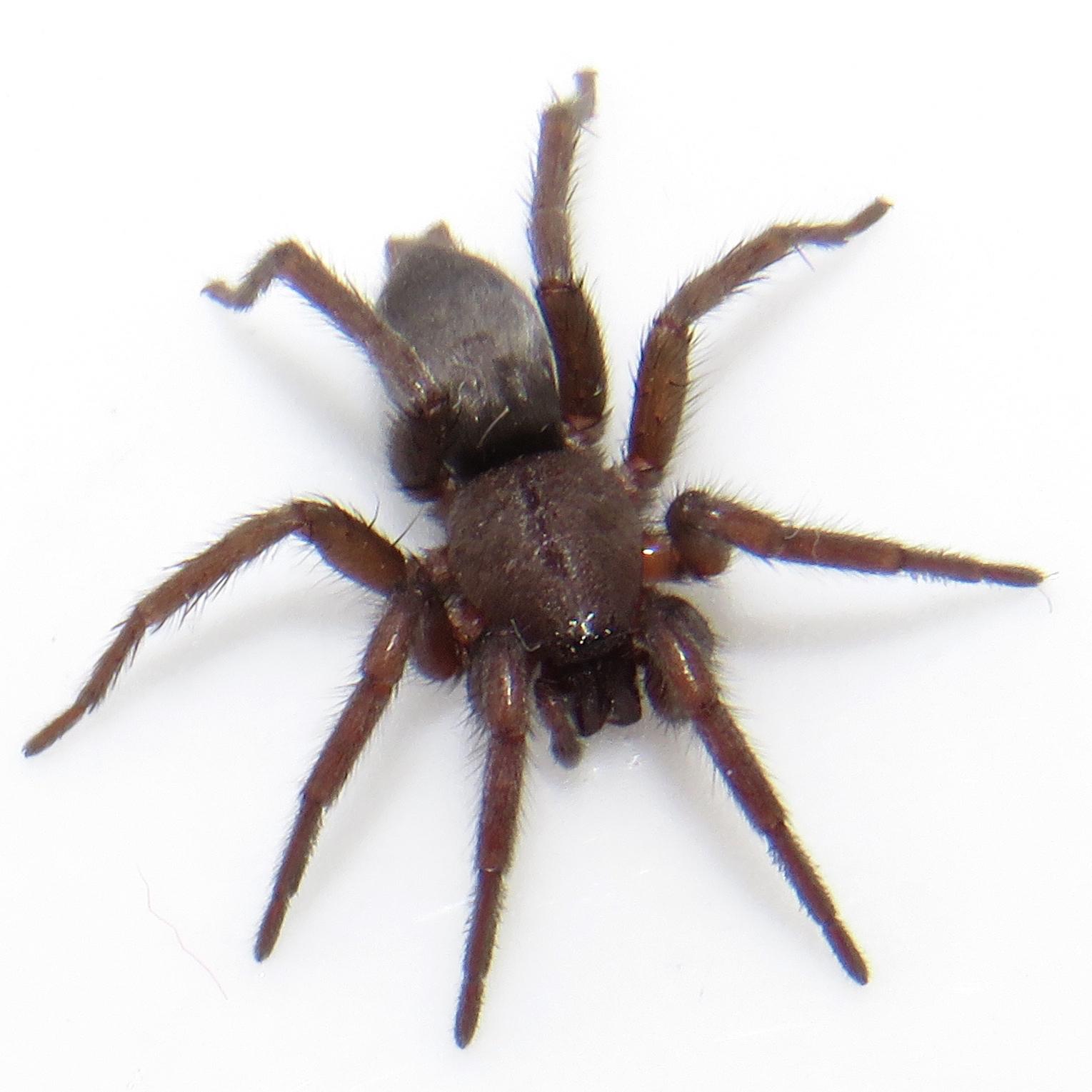 Spider Kitchen Uk