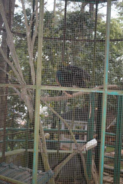 Taman Burung Tropis Bukittinggi