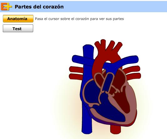 http://www.educaplus.org/play-56-Partes-del-coraz%C3%B3n.html