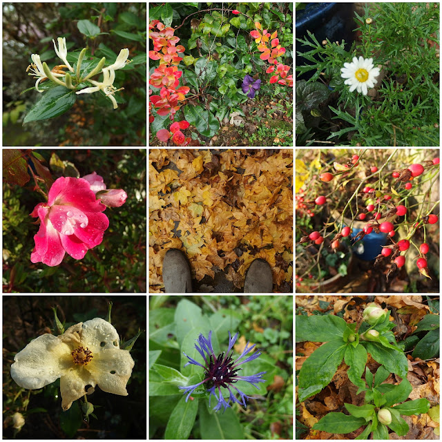 Collage of flowers and colour found in the garden this December