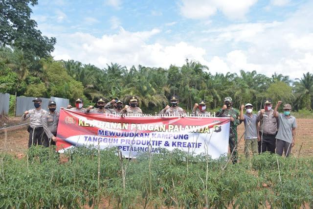 Wakapolda Jambi Tinjau ketahanan pangan di Kampung Tangguh Nusantara Desa Petaling Jaya