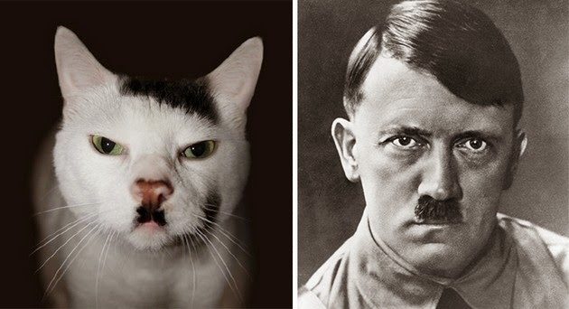 funny look alikes celebrities
