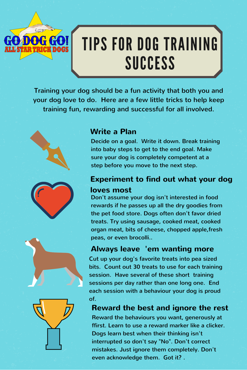 4 tips to bring joy and success to your training