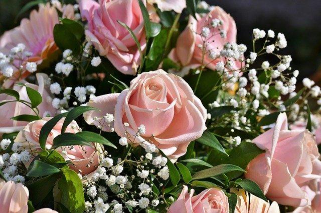 gambar bunga mawar yang angat indah