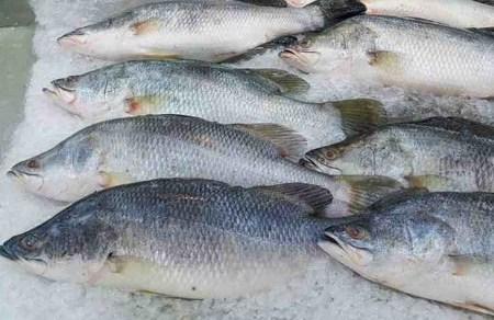 menyimpan ikan di lemari pendingin - Cara Memilih Dan Menyimpan Ikan Laut Agar Tetap Segar