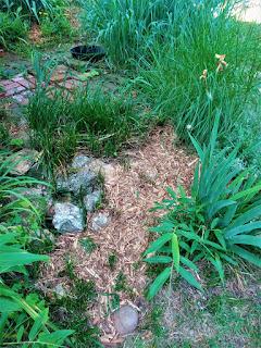 Yard and Garden Secrets Blog