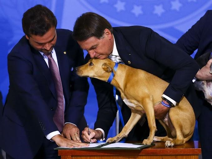 Bolsonaro sanciona Lei que aumenta pena para quem maltratar animais