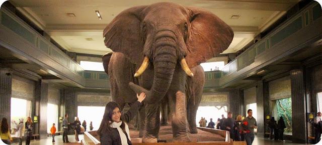 New York / Nova York / Estados Unidos / EUA / Museu de História Natural de Nova York
