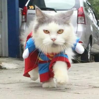 baju kucing lucu