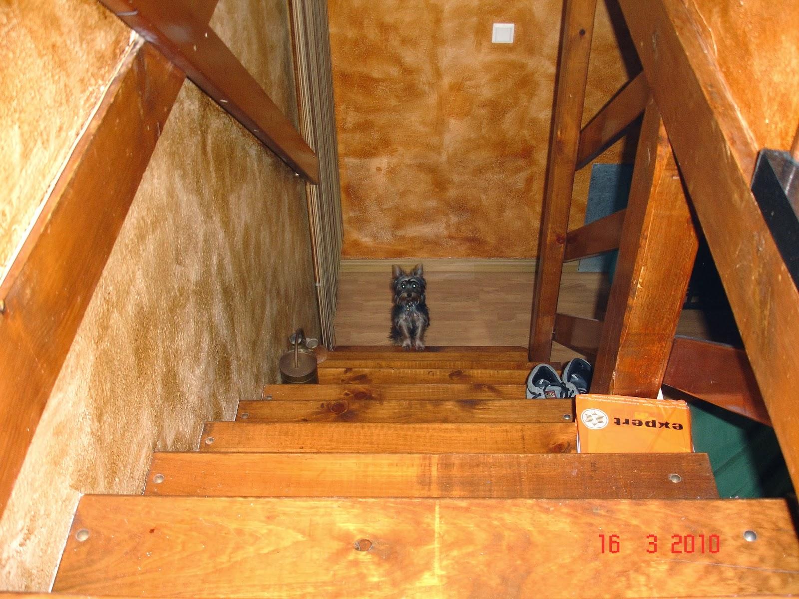La casa de noa vendo casa en pirineo valle de benasque huesca escalera de subida a la primera planta vista desde arriba fandeluxe Images