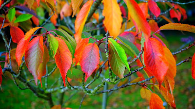 orange leaves hd resolution wallpaper