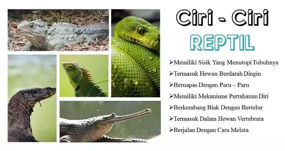 Ciri Ciri reptilia