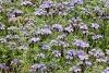 Καλλιέργεια μελισσοκομικών φυτών: Δυνατά μελίσσια χωρίς τάισμα!