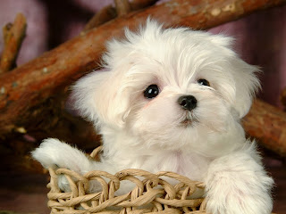 puppy images