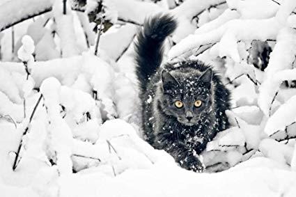 El rey, el gato y los brujos del Ártico