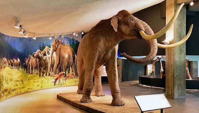 La Brea Tar Pits Museum