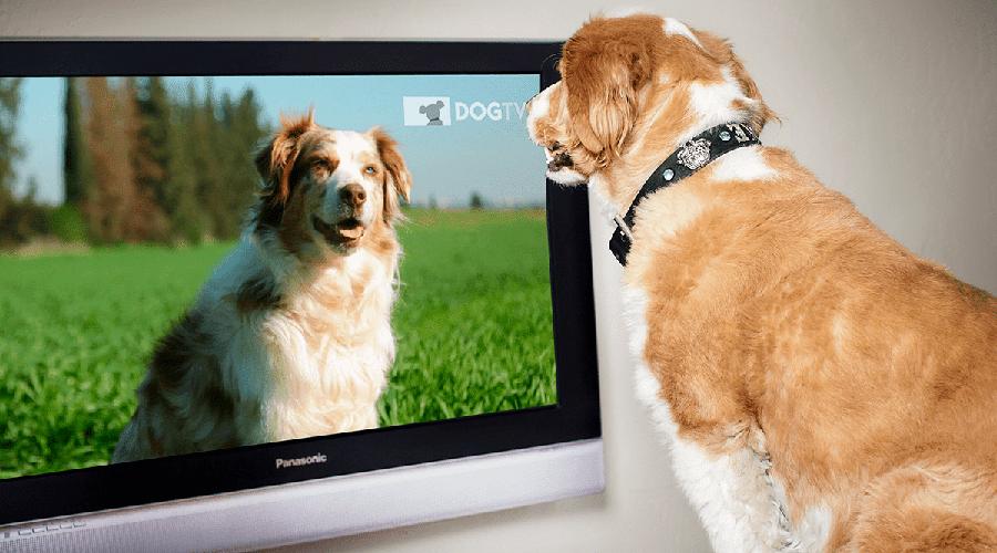 Kode Biss Key Terbaru Dari Channel Dog TV
