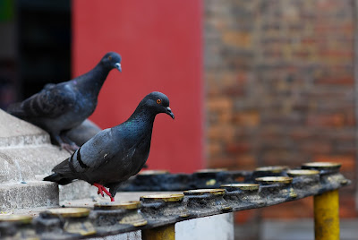Pigeons on a roof.