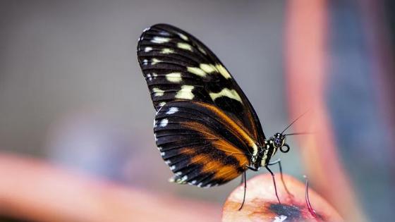 Efecto mariposa