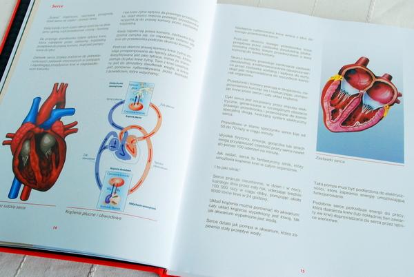 Wnętrze książki – część edukacyjna