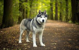 Hayvanlar İle İlgili Sözler, Hayvanlarla ilgili sözler köpek, Hayvanlar ile ilgili sözler tumblr, Köpek sevgisi ile ilgili sözler, Hayvan sevgisi ile ilgili yazılar, Hayvanlarla ilgili dini sözler, Hayvana şiddetle ilgili sözler, En içten hayvanlarla ilgili sözler, Hayvan sevgisi ile ilgili ingilizce sözler en güzel sözleri