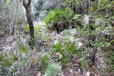 Bosque mediterráneo en la Sierra del Montsia