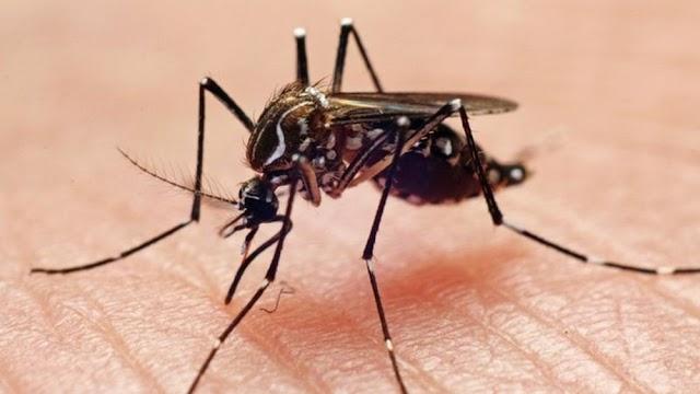 Paraná chega a 26.672 casos confirmados de dengue com 32 mortes, diz Sesa