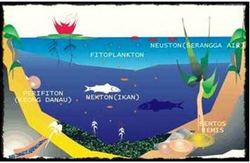 Gambar area hidup/habitat organisme ekosistem air tawar Sumber: ekosistem-ekologi.blogspot.com