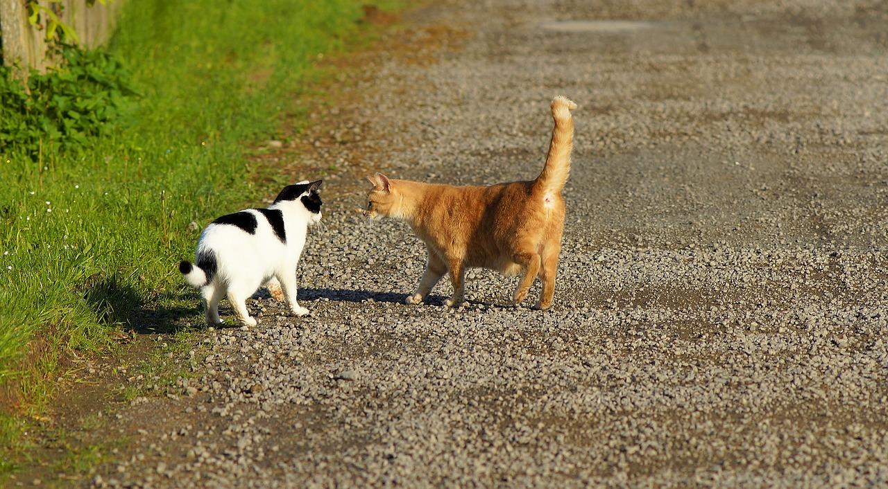 Comment présenter un bébé chat à un chat adulte